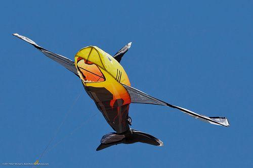 Very eye-catching sparred shark kite.